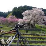 サイクリング 又兵衛桜~祈りの滝(水越峠)