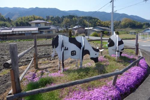 畜産ならショップの牛