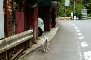 峠茶屋の犬