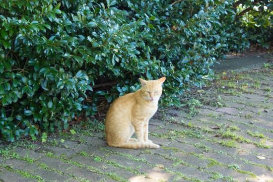 潮岬灯台の猫