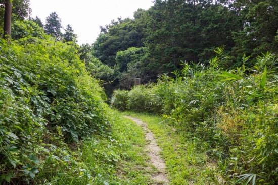 十三峠からの山道