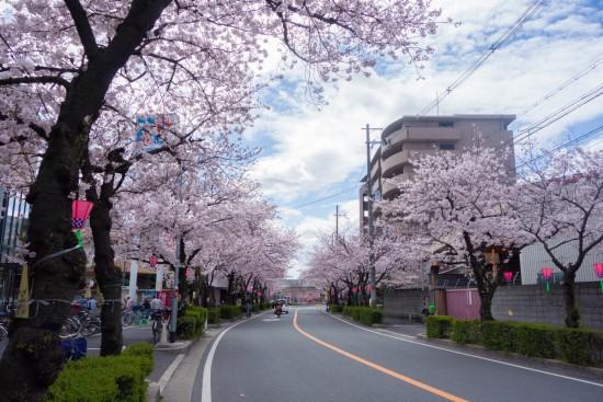 花園桜通り