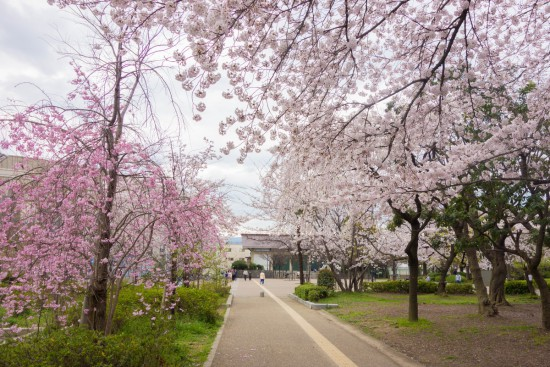 八戸ノ里公園
