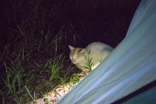 食事を狙う猫