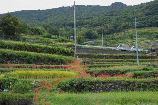 中山千枚田