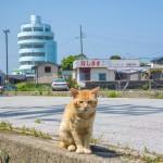 3度目の和歌山ソロキャンプ・サイクリング 潮岬キャンプ場~白浜