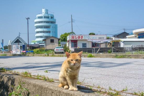 潮岬キャンプ場近くで見かけた猫
